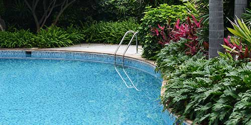 Tropical landscaping creating a lush oasis around a pool