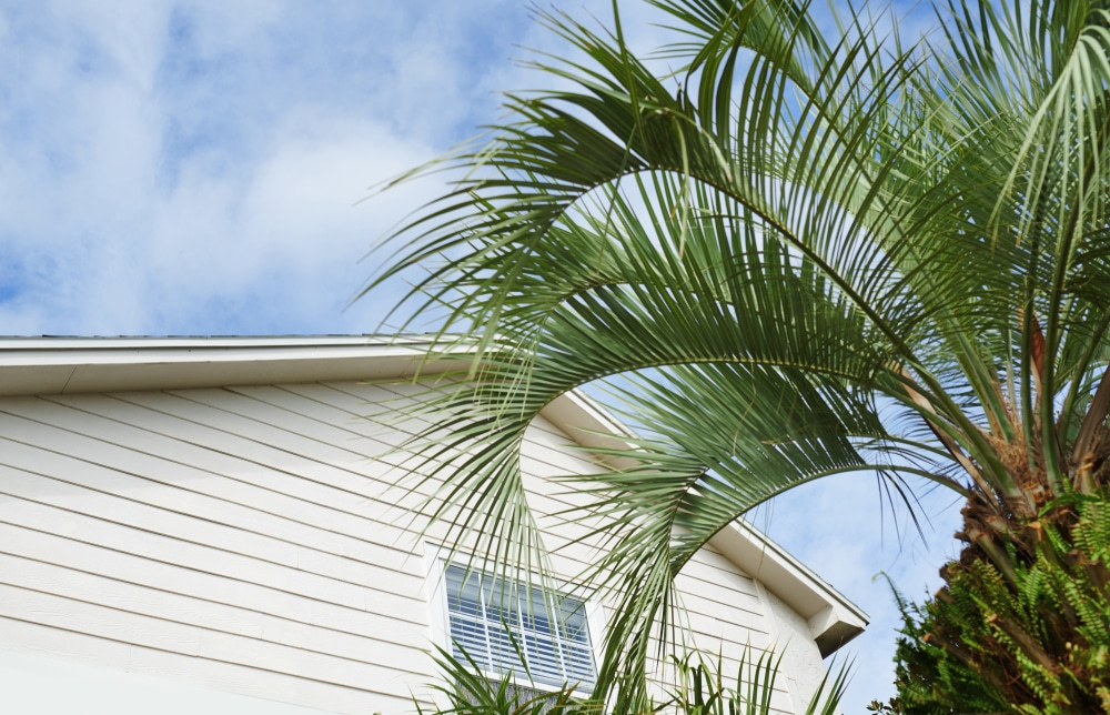 Palm trees in front of a house